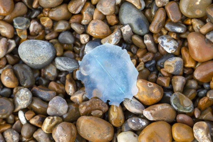 Microplastics are in the air we breathe and in Earth's atmosphere, and they affect the climate