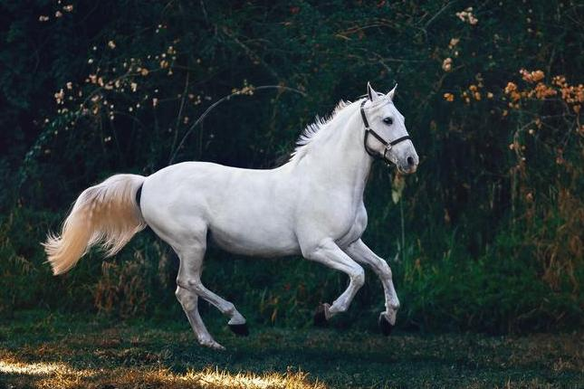 Wound gel shows promise for horses - humans